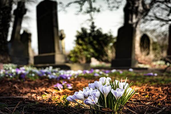 Flori pentru Luminație