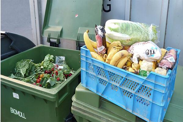 Alimente aruncate la gunoi